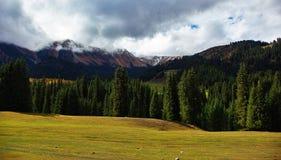 Mattina nebbiosa nelle montagne Kirgizia immagini stock libere da diritti