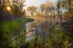 Mattina nebbiosa serena su una riva del lago Immagini Stock