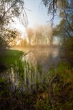 Mattina nebbiosa serena su una riva del lago Immagine Stock Libera da Diritti
