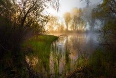 Mattina nebbiosa serena su una riva del lago Fotografie Stock