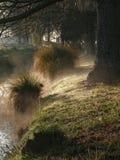 Mattina nebbiosa su una sponda del fiume Fotografia Stock