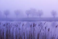 Mattina nebbiosa sul canale nei Paesi Bassi Fotografia Stock