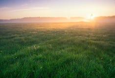 Mattina nebbiosa sul prato. paesaggio di alba. Immagini Stock