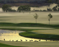 Mattina nebbiosa sul terreno da golf Fotografia Stock