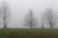 Mattina nebbiosa sulla regione selvaggia Fotografia Stock Libera da Diritti