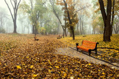 Mattina nebbiosa in un parco di autunno Fotografia Stock