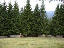 Mattina nei Carpathians ucraini Nebbia alle colline Fotografia Stock