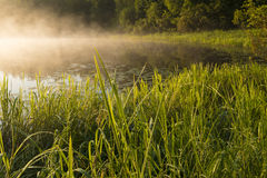 Mattina nell'erba della riva Fotografie Stock