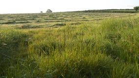 Mattina nella campagna, Regno Unito di estate Fotografia Stock Libera da Diritti
