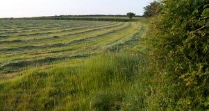 Mattina nella campagna, Regno Unito di estate Fotografia Stock