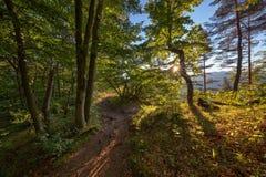 Mattina nella foresta Fotografie Stock Libere da Diritti