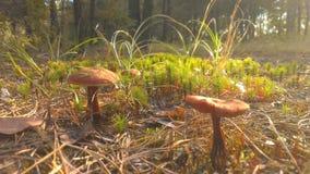 Mattina nella foresta Immagine Stock