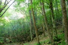 Mattina nella foresta fotografia stock libera da diritti