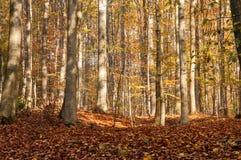 Mattina nella foresta Immagini Stock Libere da Diritti
