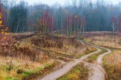 Mattina nella foresta, strada di autunno del campo in nebbia immagini stock
