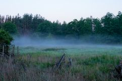 Mattina nella nebbia della foresta di mattina della foresta Immagine Stock Libera da Diritti