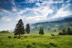 Mattina nelle alpi, Austria, Rauris Paesaggio della natura Immagine Stock