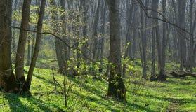 Mattina in primavera fotografia stock libera da diritti