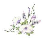 Mattina rosa Glory Field Bindweed, fiori di convolvulus arvensis Immagini Stock Libere da Diritti