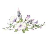 Mattina rosa Glory Field Bindweed, fiori di convolvulus arvensis Fotografia Stock Libera da Diritti