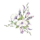 Mattina rosa Glory Field Bindweed, fiori di convolvulus arvensis Fotografia Stock
