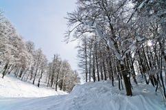 Mattina soleggiata alla montagna Vogel in alpi slovene Immagini Stock