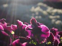 Mattina soleggiata della molla Fotografia Stock