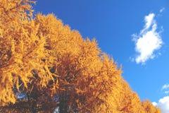 Mattina soleggiata di autunno in Russia 2 Fotografia Stock Libera da Diritti