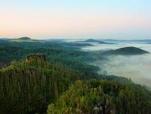 Mattina soleggiata di autunno sopra la foresta di morte sulla collina rocciosa I tronchi asciutti stanno attaccando su Immagini Stock Libere da Diritti
