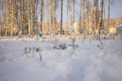 Mattina soleggiata e gelida di inverno nella foresta immagine stock libera da diritti