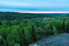 Mattina sopra la foresta della molla Fotografia Stock Libera da Diritti