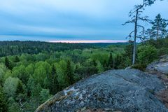 Mattina sopra la foresta della molla Fotografie Stock Libere da Diritti