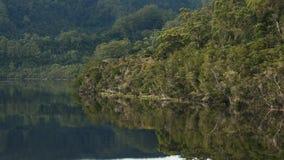 Mattina sparata della foresta pluviale temperata sul fiume di Gordon in Tasmania video d archivio