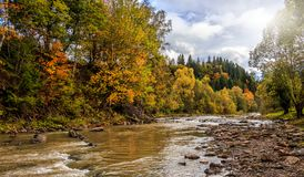 Mattina stupefacente sul fiume della montagna alberi variopinti che emettono luce al sole Fotografie Stock