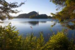 Mattina sul lago sanguinato Immagini Stock Libere da Diritti