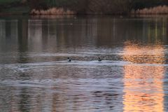 Mattina sul lago Wolfsburg, Germania fotografia stock