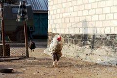Mattina sull'azienda agricola Fotografia Stock Libera da Diritti