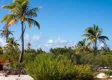 Mattina sull'isola tropicale Immagine Stock Libera da Diritti