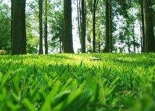 Mattina in un parco, luce del giorno viva Fotografia Stock