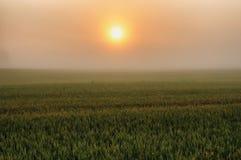 Mattina una bella alba di estate nel campo Immagini Stock Libere da Diritti