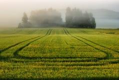 Mattina una bella alba di estate nel campo Fotografia Stock Libera da Diritti