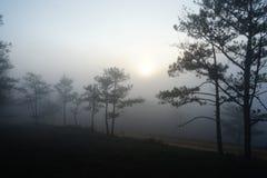 Mattina in una foresta del pino fotografie stock