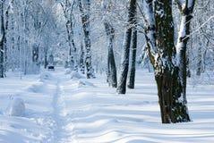 Mattina in una sosta di inverno Fotografia Stock
