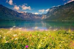 Mattina variopinta di estate sul lago Bohinj in Triglav p nazionale Immagine Stock Libera da Diritti