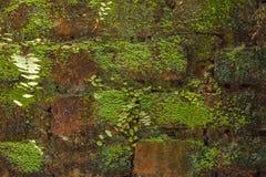 Mattone Moss Wall Immagine Stock Libera da Diritti