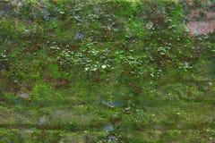 Mattone Moss Wall Immagini Stock