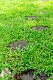 mattonelle decorative nei ceppi di albero, diffusione del giardino fuori nell'erba Fotografia Stock