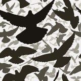 Mattonelle del piccione Fotografia Stock Libera da Diritti