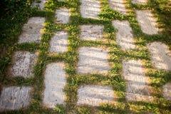 Mattonelle della via del granito di Beetween dell'erba verde sul tramonto immagini stock