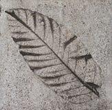 Mattonelle di pavimento del cemento Immagini Stock